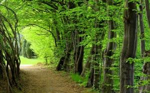 caminos-del-bosque
